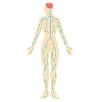 人間の体画像