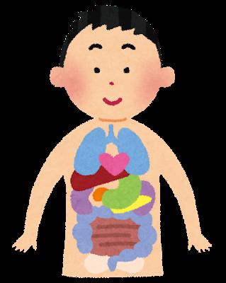 スケスケな内臓のイラスト